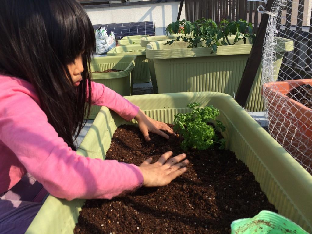 娘と2年目の南砂農園