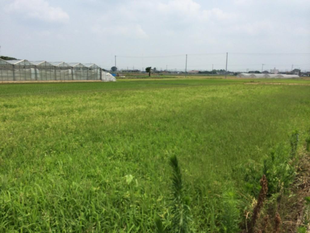 菖蒲町:建国候補地1