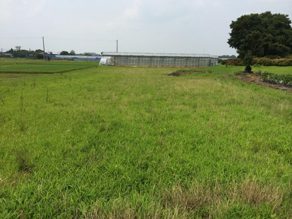 菖蒲町:建国候補地2