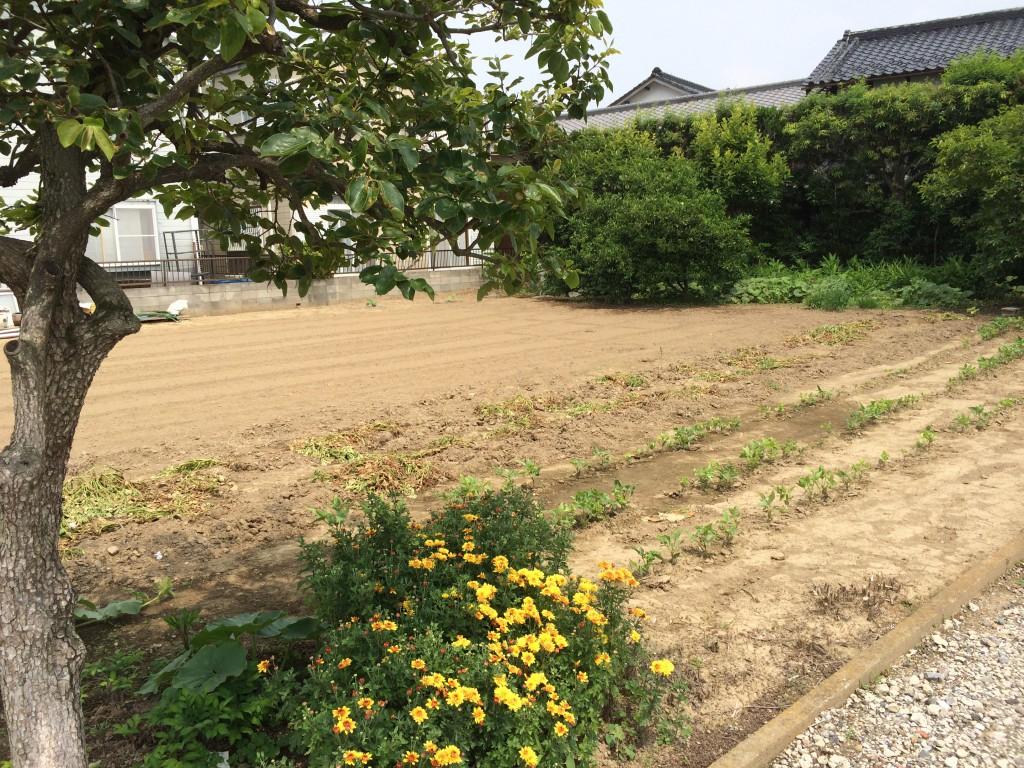 菖蒲町:建国候補地4