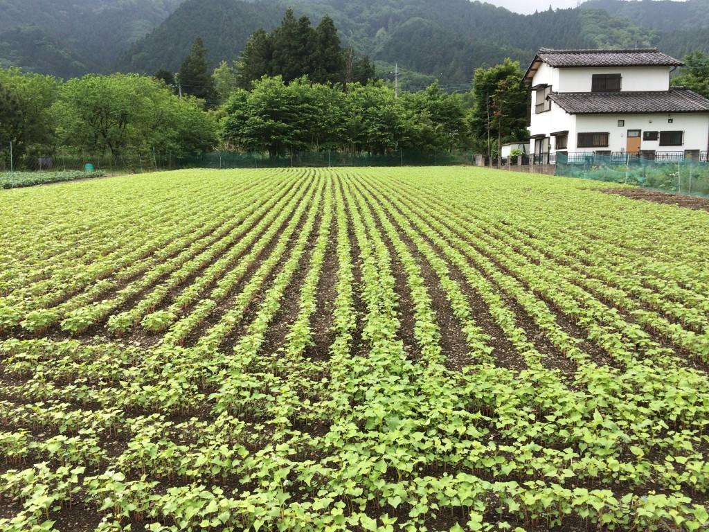 建国日記5:蕎麦