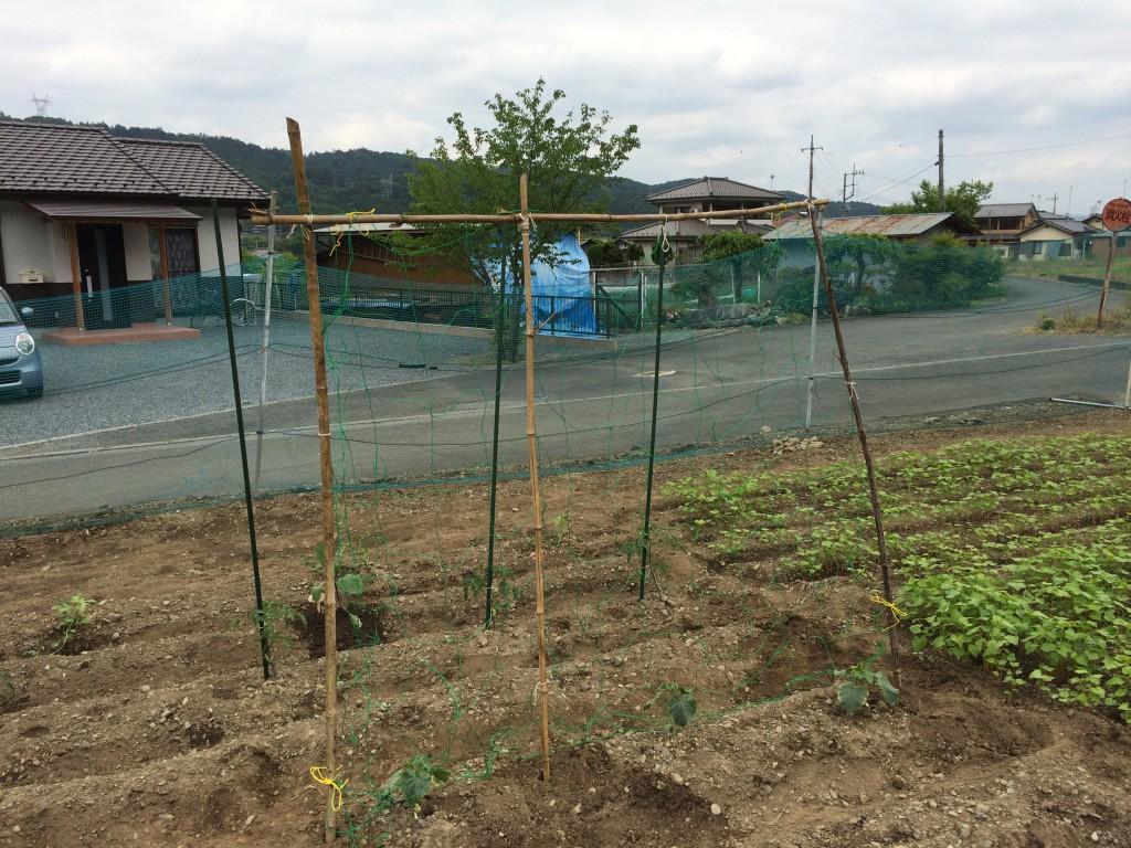 建国日記5:竹の支柱