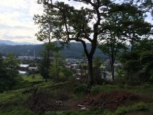 ブランコを作る予定の木(6月29日撮影)