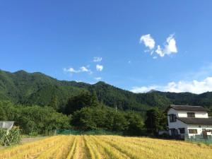 蕎麦の刈り取りが終わった直後の秩父の畑