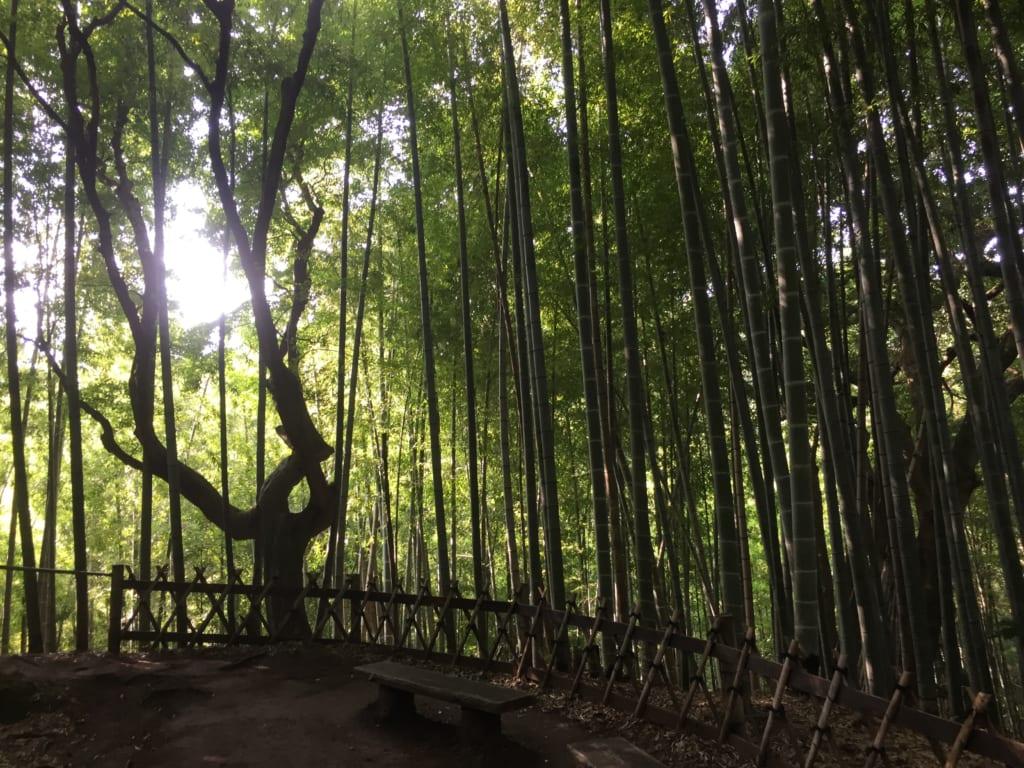 檑亭の竹林