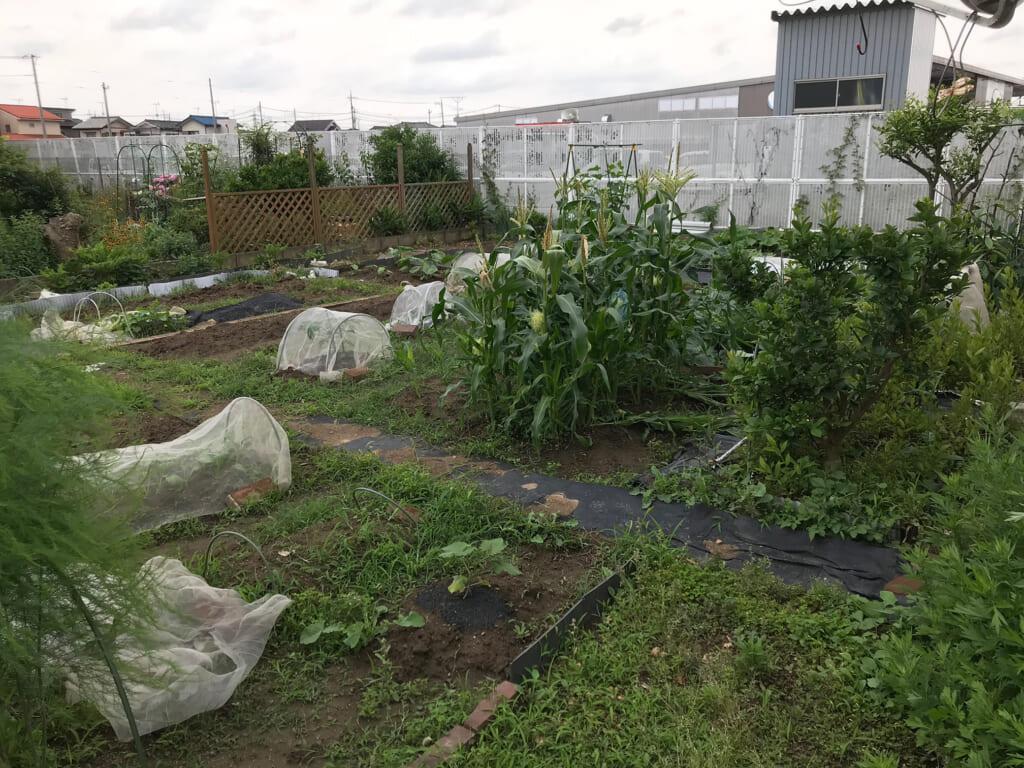 実家の庭では、母が無農薬で野菜を作っている